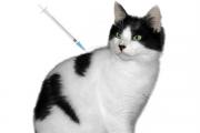 Control of animal disease - Feline